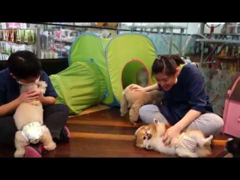 88 PETS MART [DOG HOTEL] 狗狗酒店(Petaling Jaya, Malaysia) 2016 # 12