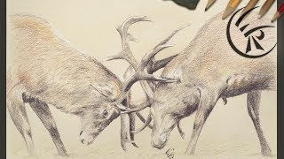 "Drawing ""Deer Fight"" ►► Timelapse"