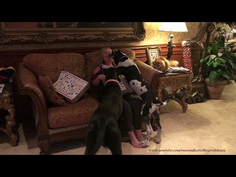 Great Dane Puppy and Cat Wish Fairy God Mother Happy Birthday