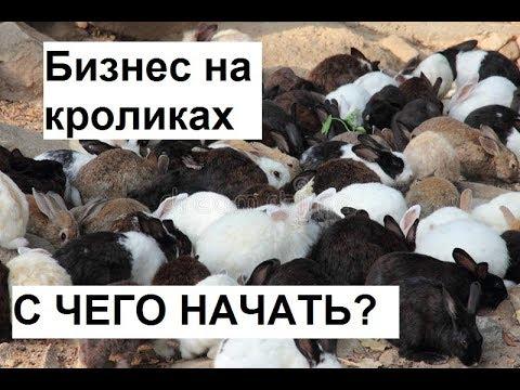 Разведение кроликов как
