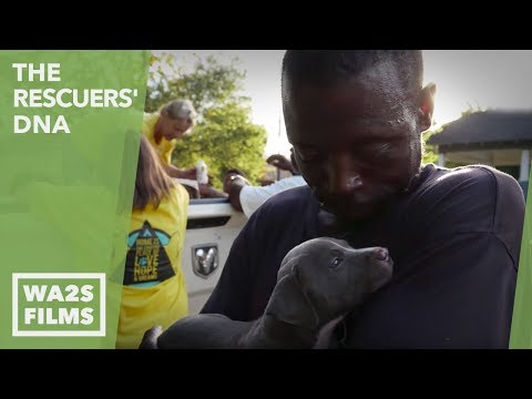 Dog Rescuers Help Pit Bull Puppies With Small Miracle - Hope For Dogs Like My DoDo