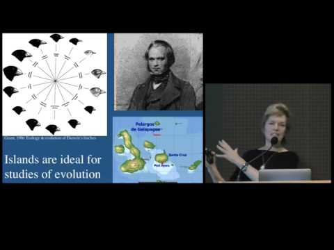 Ecology, Evolution, and Species Diversification in Hawaiian Islands on YouTube