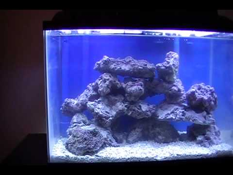 reefs day debacle - photo #45