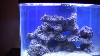 My 10 Gal Nano Reef (day 1) + Other Diy Stuff