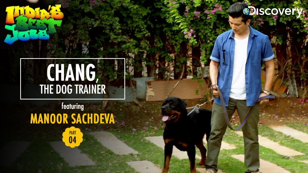 chang the dog trainer indias best jobs - Jobs With Animals Best Jobs Working With Animals