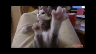 Приколы с животными  Веселые и смешные коты Кот и петух