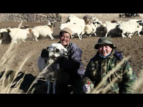 Monitoring of brucellosis control in Mongolia [excerpt]