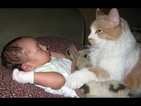 Adorable Cats Protecting and Loving Babies –  Cat Loves Baby Videos Compilation
