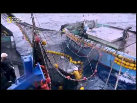 Taiwan Island Of Fish S01E02