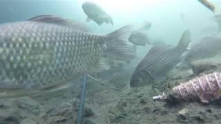 ловля карася на пенопласт весной в Беловском водохранилище