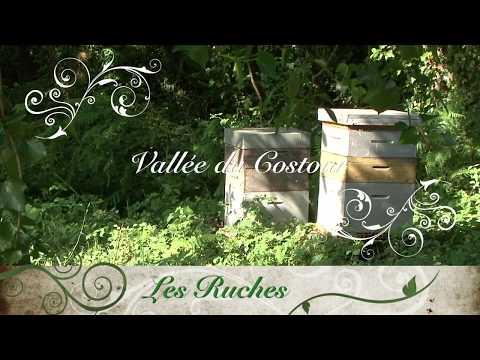 les ruches de la vallée du Costour Brest