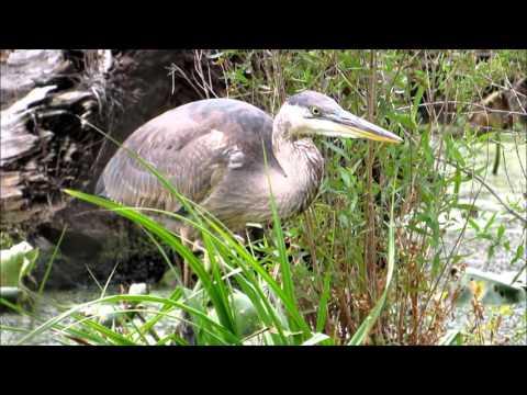 Hiking Pennsylvania: Wildwood Park