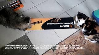 Школа ремонта в приюте для бездомных животных отделка помещения для кошек и собак