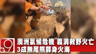 澳洲氣候危機 義消救野火亡 3成無尾熊葬身火海《9點換日線》2020.01.06