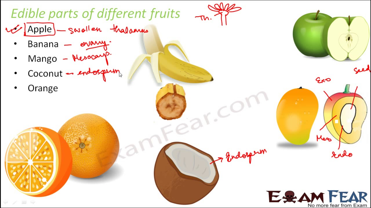 Biology Sexual Reproduction In Plants Part 19 Fruit Structure
