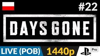 Days Gone PL  #22 (odc.22 Poboczne - live)  Mike - obóz i okolice   Gameplay po polsku 4K