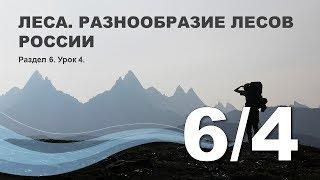 6/4 Леса. Разнообразие лесов России