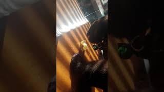 Кот ест макароны в замедлении