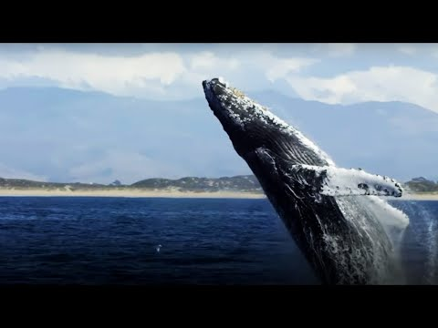 The Future Of The Oceans - Blue Planet II