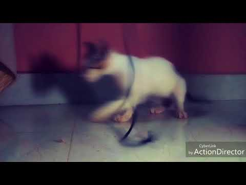 Cats playing with thread funny video| funniest cats|kittens