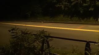 【クソ動画】心霊スポットで前フリを撮っていたら、タピオが『おしっこおしっこ』と行って立ちションに向かう動画