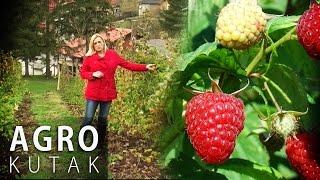 Agro Kutak 55 - Uzgoj malina za pocetnike - 15.11.2016.