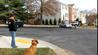 Puppy Obedience Training With Top Dog Trainers Off Leash K9 Training Columbia