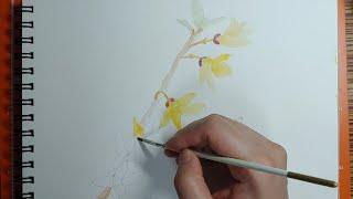 [23팥] 개나리 그리기 | 수채화 개나리 그림 | 꽃…