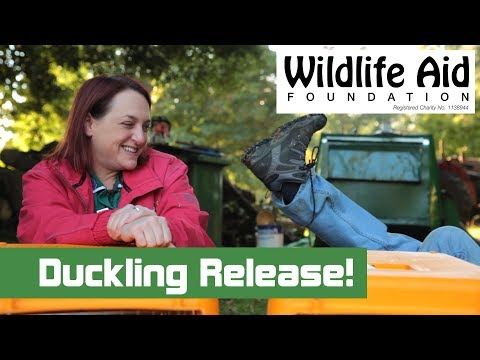Wildlife SOS Full Episodes - LIVE WEEKLY UPDATES