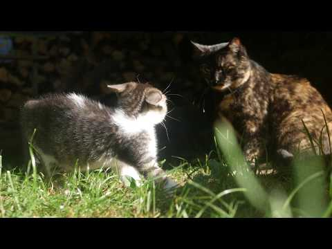 Kitten sees a cat for the first time 4k UHD 🐈 🐱 9th Symphony, Finale (by Beethoven)