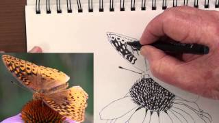 how to draw a butterfly on a flower in pen & ink
