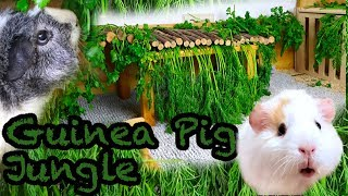 DIY Guinea Pig Jungle: How to Make a Guinea Pig Paradise