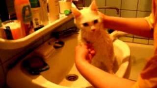 Как помыть кошку-2