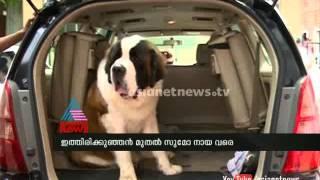 Dog show at Kollam  by kollam kennel club : Chuttuvattom News