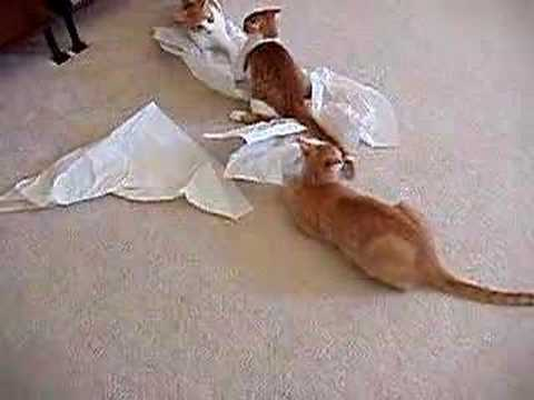 Cats and tissue paper!