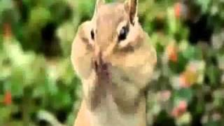 Funny Animals with voice over..