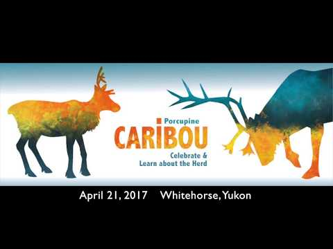 porcupine-caribou:-celebrate-and-learn-about-the-herd-(2/8)---sebastian-jones