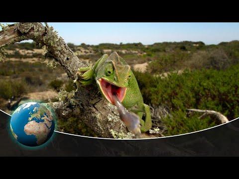 The fascinating fauna of the Mediterranean Sea