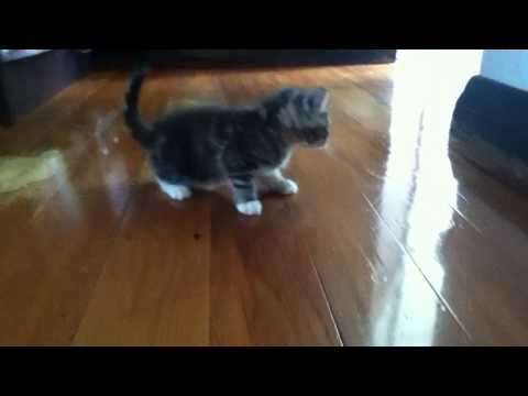 meowing kitten calling for mum