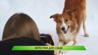 Фотограф для собак (выпуск от 25.02.2016)