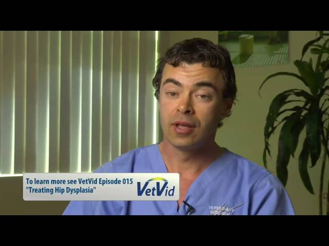 Total Hip Replacement in Dogs, VetVid Episode 016