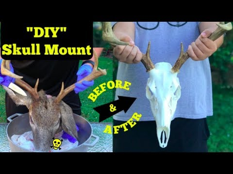 Whitetail Deer European Mount | Instructional Video