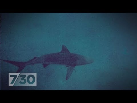Two shark attacks re-ignite the debate about drum lines | 7.30