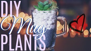 DIY MUG PLANTS! Succulents for Summer, on a Budget! The Perfect Plant Gift - More Mary!