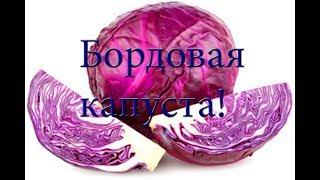 """""""Бордовый салат"""" из красивой капусты"""