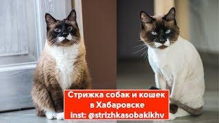 Стрижка кошек. Стрижка собак. Стрижка животных . time lapse