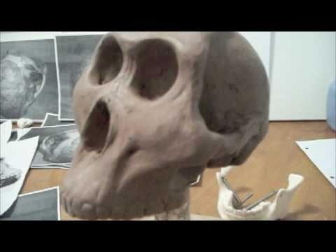 Lucy ( australopithecus ) sculpture