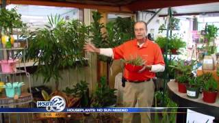 Green Thumbs: No sun needed houseplants