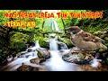 Masteran Greja Nyeret Terapi Gemercik Air Cocok Untuk Cendet Cucak Hijau Kacer Murai Pleci  Mp3 - Mp4 Download