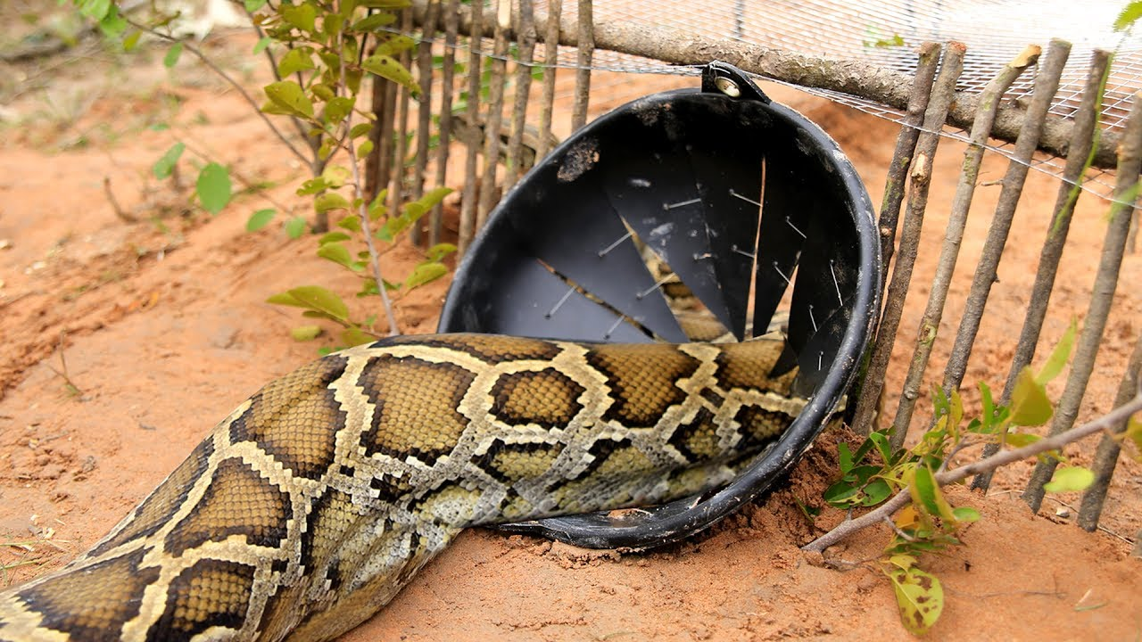 Snake catcher shares his call out hotspots